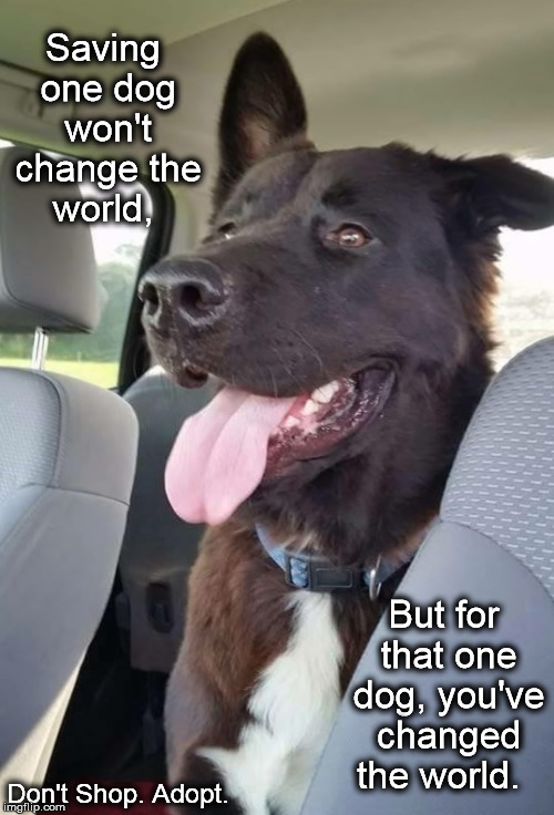 Freedom Ride | Saving one dog won't change the world, Don't Shop. Adopt. But for that one dog, you've changed the world. | image tagged in don't shop adopt,dog rescue,dog foster,happy dog,best friend,save a life | made w/ Imgflip meme maker