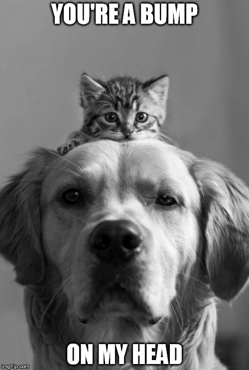 bump on my head | YOU'RE A BUMP ON MY HEAD | image tagged in bump on my head,cats,dogs,bump,memes | made w/ Imgflip meme maker