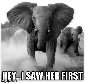 Charging Elephant | HEY...I SAW HER FIRST | image tagged in charging elephant | made w/ Imgflip meme maker