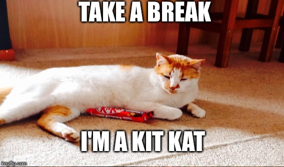 Funny Cat Meme Generator : Kit kat cat imgflip