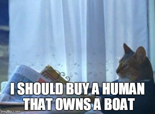 s3dq7 i should buy a boat cat meme imgflip