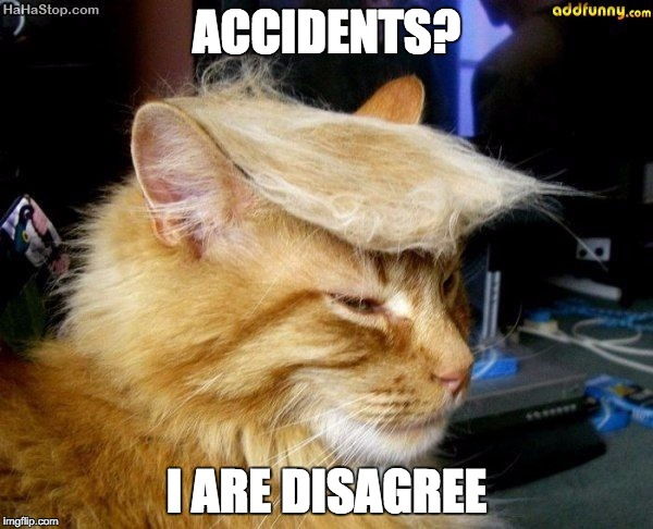 donald trump cat | ACCIDENTS? I ARE DISAGREE | image tagged in donald trump cat | made w/ Imgflip meme maker