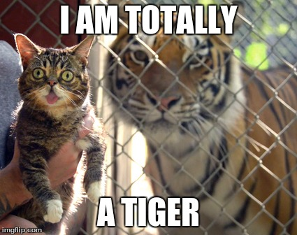 Lil Bub does it again! | I AM TOTALLY A TIGER | image tagged in tiger,lil bub,cat | made w/ Imgflip meme maker