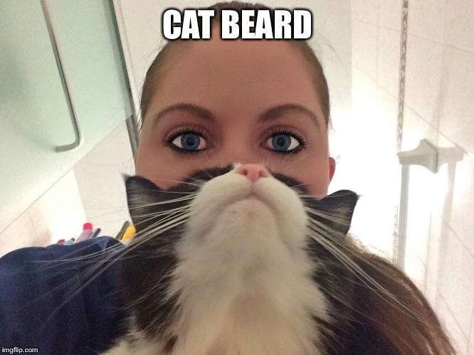 s7gv9 funny cat memes imgflip