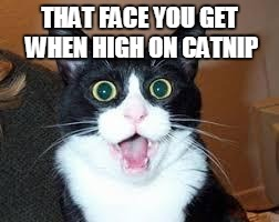 Holy Shit are you Sexy. | THAT FACE YOU GET WHEN HIGH ON CATNIP | image tagged in holy shit are you sexy | made w/ Imgflip meme maker
