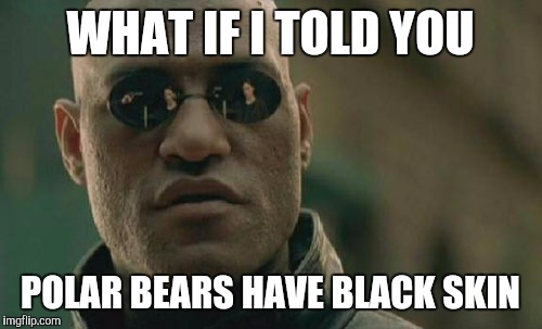 Matrix Morpheus Meme | WHAT IF I TOLD YOU POLAR BEARS HAVE BLACK SKIN | image tagged in memes,matrix morpheus | made w/ Imgflip meme maker