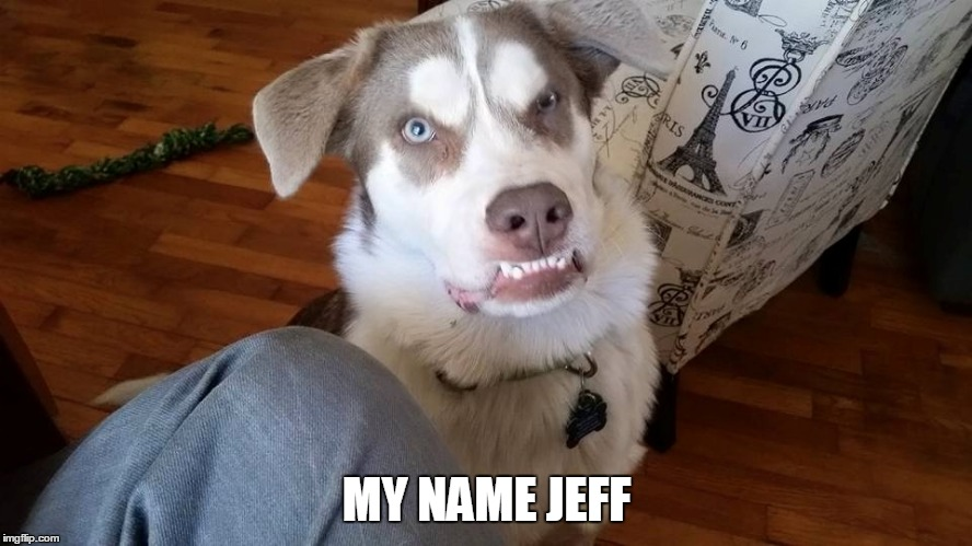 My name jeff | MY NAME JEFF | image tagged in my name jeff,retarded,dog,dumb dog,retarded dog | made w/ Imgflip meme maker