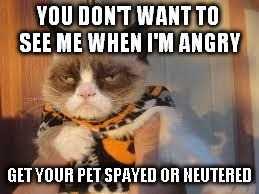 Grumpy Cat Halloween | YOU DON'T WANT TO SEE ME WHEN I'M ANGRY GET YOUR PET SPAYED OR NEUTERED | image tagged in memes,grumpy cat halloween,grumpy cat | made w/ Imgflip meme maker