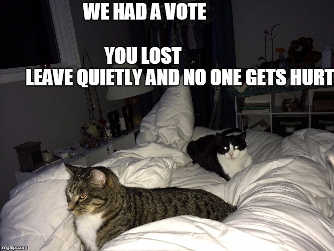 We had a vote - you lost | WE HAD A VOTE                                                  YOU LOST                         LEAVE QUIETLY AND NO ONE GETS HURT | image tagged in cats,bed | made w/ Imgflip meme maker