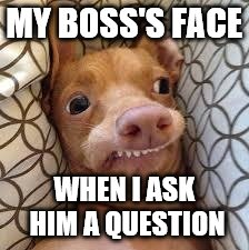 dumb dog | MY BOSS'S FACE WHEN I ASK HIM A QUESTION | image tagged in dumb dog | made w/ Imgflip meme maker