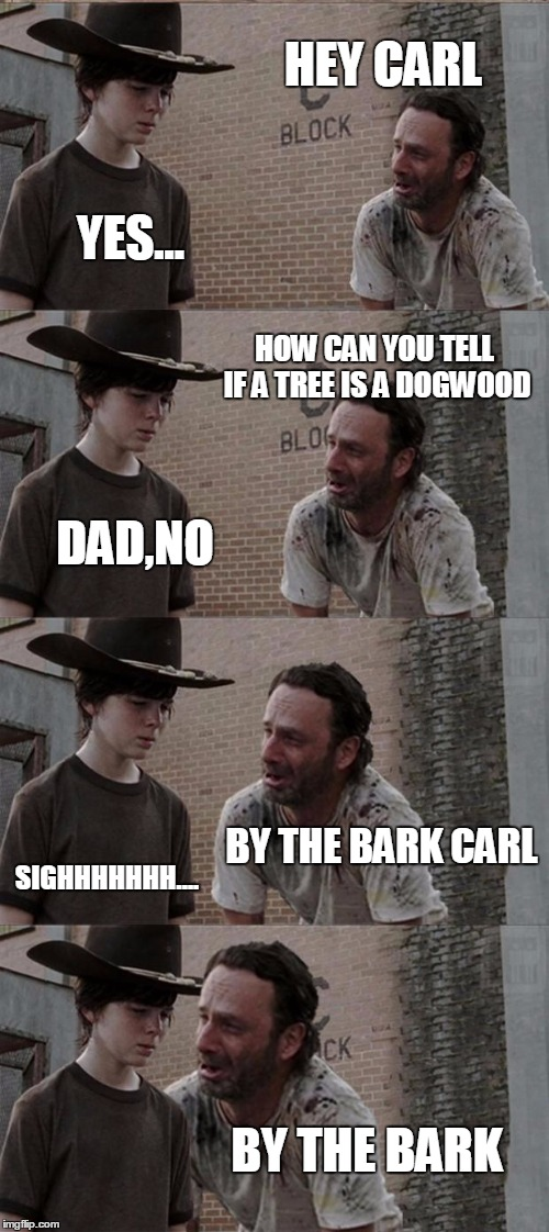 Rick and Carl Long Meme | HEY CARL YES... HOW CAN YOU TELL IF A TREE IS A DOGWOOD DAD,NO BY THE BARK CARL SIGHHHHHHH.... BY THE BARK | image tagged in memes,rick and carl long | made w/ Imgflip meme maker