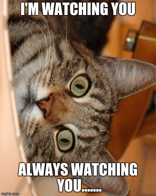Crazy Cat | I'M WATCHING YOU ALWAYS WATCHING YOU....... | image tagged in crazy cat | made w/ Imgflip meme maker