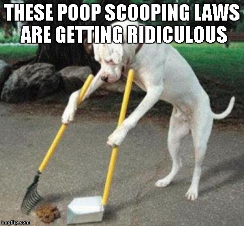 Such is the life of Raydog | THESE POOP SCOOPING LAWS ARE GETTING RIDICULOUS | image tagged in dog scooping poop,funny,dog,poop | made w/ Imgflip meme maker