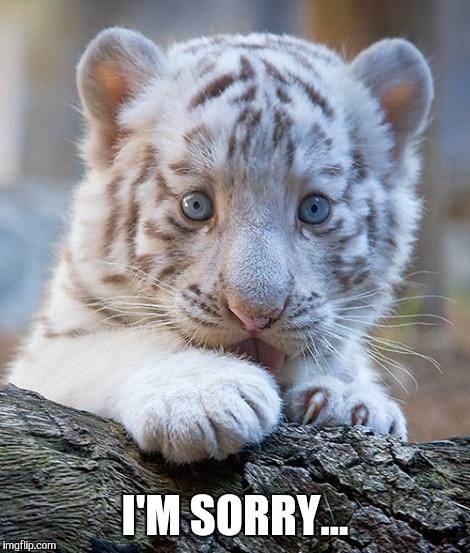 Please forgive me! | I'M SORRY... | image tagged in please forgive me | made w/ Imgflip meme maker