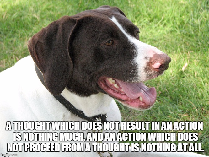A thought which does not result in an action is nothing much... | A THOUGHT WHICH DOES NOT RESULT IN AN ACTION IS NOTHING MUCH, AND AN ACTION WHICH DOES NOT PROCEED FROM A THOUGHT IS NOTHING AT ALL. | image tagged in blitz,gsp,german shorthaired pointer,thought,action | made w/ Imgflip meme maker