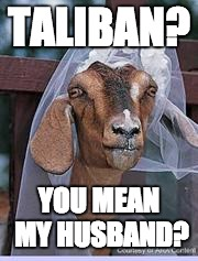 Muslim Goat Bride | TALIBAN? YOU MEAN MY HUSBAND? | image tagged in muslim goat bride | made w/ Imgflip meme maker