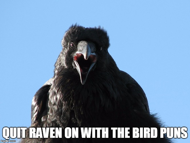 QUIT RAVEN ON WITH THE BIRD PUNS | made w/ Imgflip meme maker