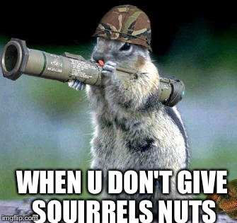Bazooka Squirrel Meme | WHEN U DON'T GIVE SQUIRRELS NUTS | image tagged in memes,bazooka squirrel | made w/ Imgflip meme maker