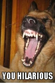 Laughing Dog | YOU HILARIOUS | image tagged in laughing dog | made w/ Imgflip meme maker