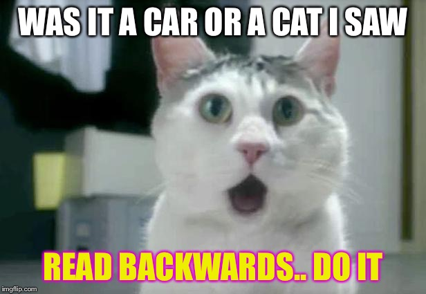 OMG Cat Meme | WAS IT A CAR OR A CAT I SAW READ BACKWARDS.. DO IT | image tagged in memes,omg cat | made w/ Imgflip meme maker