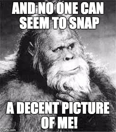 Bigfoot | AND NO ONE CAN SEEM TO SNAP A DECENT PICTURE OF ME! | image tagged in bigfoot | made w/ Imgflip meme maker