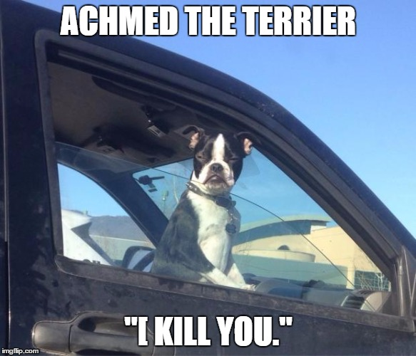 "Boston Terrier | ACHMED THE TERRIER ""[ KILL YOU."" 