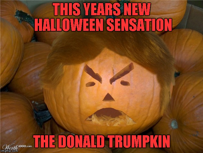Get yours today! | THIS YEARS NEW HALLOWEEN SENSATION THE DONALD TRUMPKIN | image tagged in donald trumpkin,trump,political,funny,halloween | made w/ Imgflip meme maker