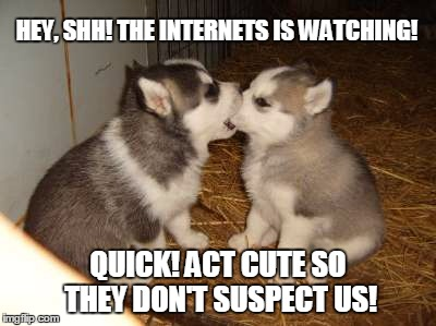 Cute Puppies | HEY, SHH! THE INTERNETS IS WATCHING! QUICK! ACT CUTE SO THEY DON'T SUSPECT US! | image tagged in memes,cute puppies | made w/ Imgflip meme maker