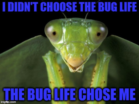 I DIDN'T CHOOSE THE BUG LIFE THE BUG LIFE CHOSE ME | made w/ Imgflip meme maker