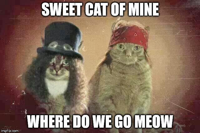 Guns & Roses | SWEET CAT OF MINE WHERE DO WE GO MEOW | image tagged in cats,funny cats,funny,funny memes,music | made w/ Imgflip meme maker