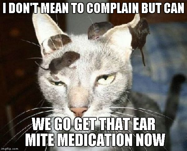 For those people that wait until the last minute to go to the vet. | I DON'T MEAN TO COMPLAIN BUT CAN WE GO GET THAT EAR MITE MEDICATION NOW | image tagged in head mice,cats,mice,funny,annimals | made w/ Imgflip meme maker