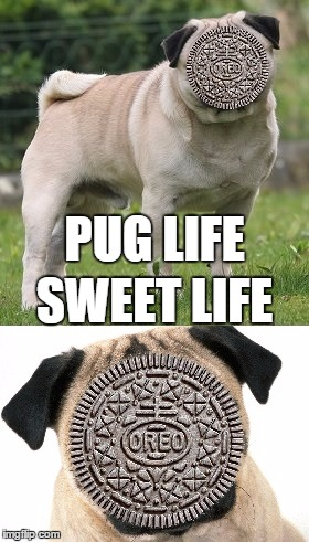 PUG LIFE SWEET LIFE | made w/ Imgflip meme maker