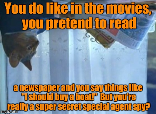 "I Should Buy A Boat Cat Meme | You do like in the movies, you pretend to read a newspaper and you say things like ""I should buy a boat!""  But you're really a super secret  