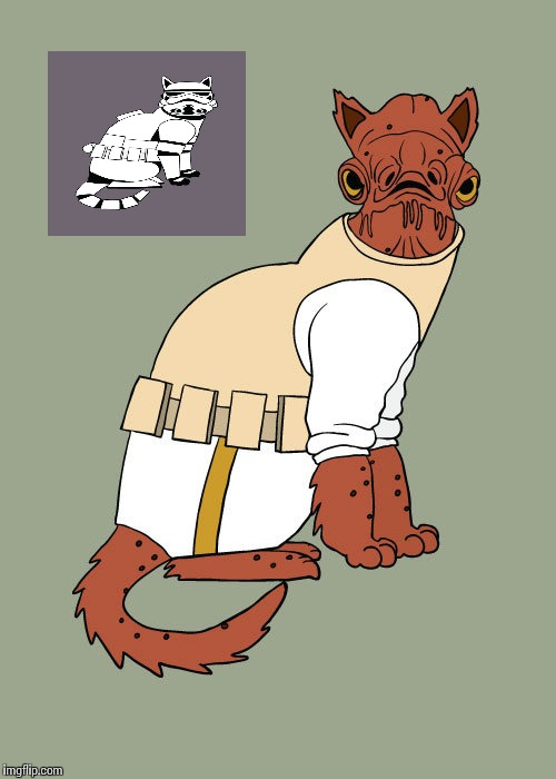 Admiral Anbar Cat | image tagged in admiral anbar cat | made w/ Imgflip meme maker