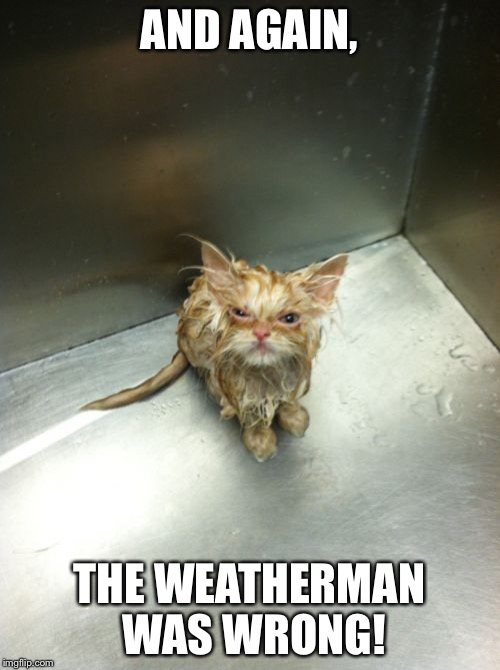 Kill You Cat | AND AGAIN, THE WEATHERMAN WAS WRONG! | image tagged in memes,kill you cat | made w/ Imgflip meme maker