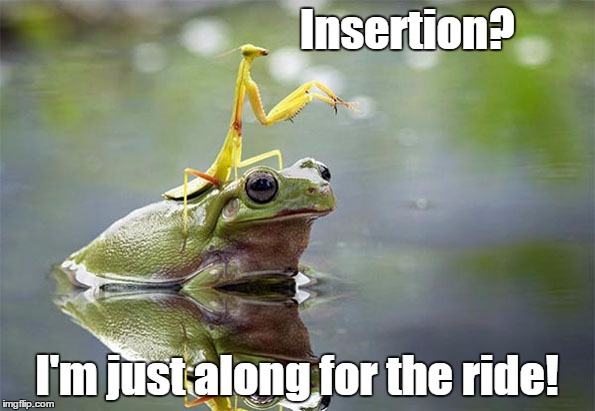 mantis on kermit | Insertion? I'm just along for the ride! | image tagged in mantis on kermit | made w/ Imgflip meme maker