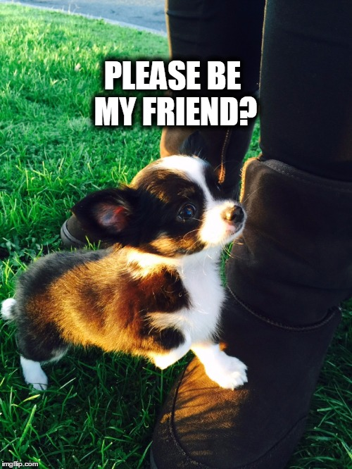 jordan chihuahua | PLEASE BE MY FRIEND? | image tagged in jordan chihuahua,cute puppy | made w/ Imgflip meme maker