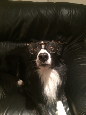 Harry Potter As A Dog Meme Template