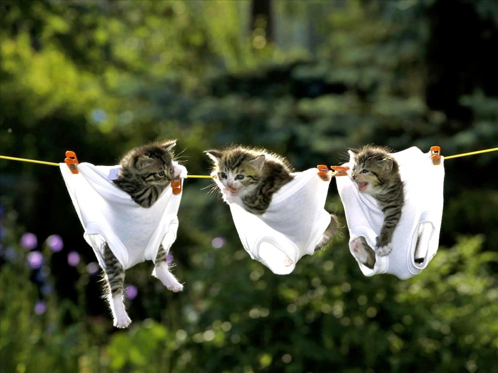 Дню рождения, видео открытки с котами