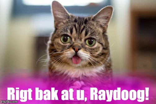 Dumb look cat | Rigt bak at u, Raydoog! | image tagged in dumb look cat | made w/ Imgflip meme maker