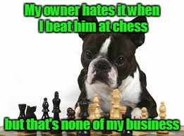 My owner hates it when I beat him at chess but that's none of my business | made w/ Imgflip meme maker