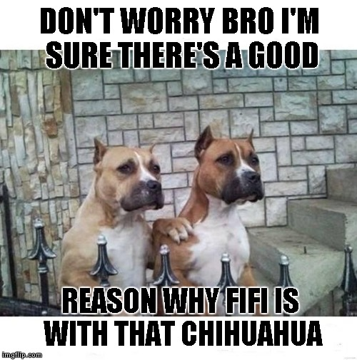 It's a dog eat dog world | DON'T WORRY BRO I'M SURE THERE'S A GOOD REASON WHY FIFI IS WITH THAT CHIHUAHUA | image tagged in don't worry bro,dogs,animals,funny,boxers | made w/ Imgflip meme maker