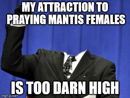 Fatal Attraction | MY ATTRACTION TO PRAYING MANTIS FEMALES IS TOO DARN HIGH | image tagged in praying mantis,too damn high | made w/ Imgflip meme maker