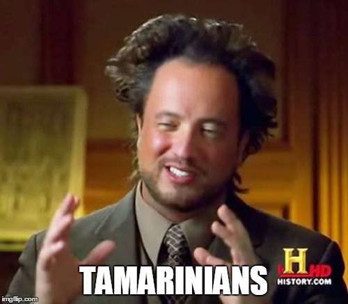 Ancient Aliens Meme | TAMARINIANS | image tagged in memes,ancient aliens | made w/ Imgflip meme maker