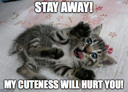 Cute Kitten | STAY AWAY! MY CUTENESS WILL HURT YOU! | image tagged in cute kitten | made w/ Imgflip meme maker