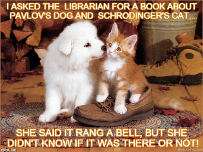 Searching for a title | I ASKED THE  LIBRARIAN FOR A BOOK ABOUT PAVLOV'S DOG AND  SCHRODINGER'S CAT... SHE SAID IT RANG A BELL, BUT SHE DIDN'T KNOW IF IT WAS THERE  | image tagged in library,cat,dog,science | made w/ Imgflip meme maker