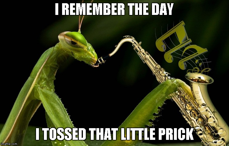 Mantis Playing Sax | I REMEMBER THE DAY I TOSSED THAT LITTLE PRICK | image tagged in mantis playing sax | made w/ Imgflip meme maker