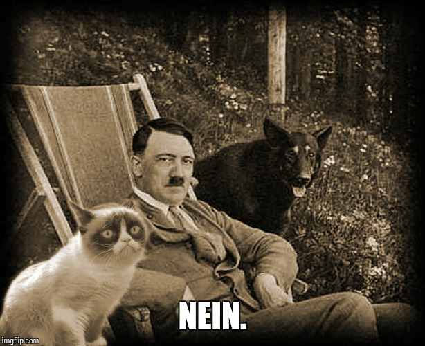 Grumpy Cat with Hitler | NEIN. | image tagged in grumpy cat with hitler | made w/ Imgflip meme maker