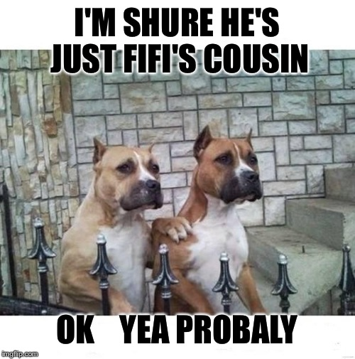Don't Worry Bro | I'M SHURE HE'S JUST FIFI'S COUSIN OK    YEA PROBALY | image tagged in don't worry bro | made w/ Imgflip meme maker
