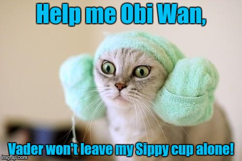 Princess LeiaCat | Help me Obi Wan, Vader won't leave my Sippy cup alone! | image tagged in princess leiacat | made w/ Imgflip meme maker